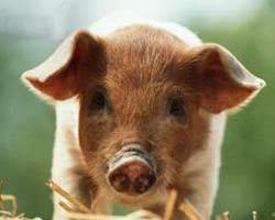 косметика со знаком не тестированно на животных